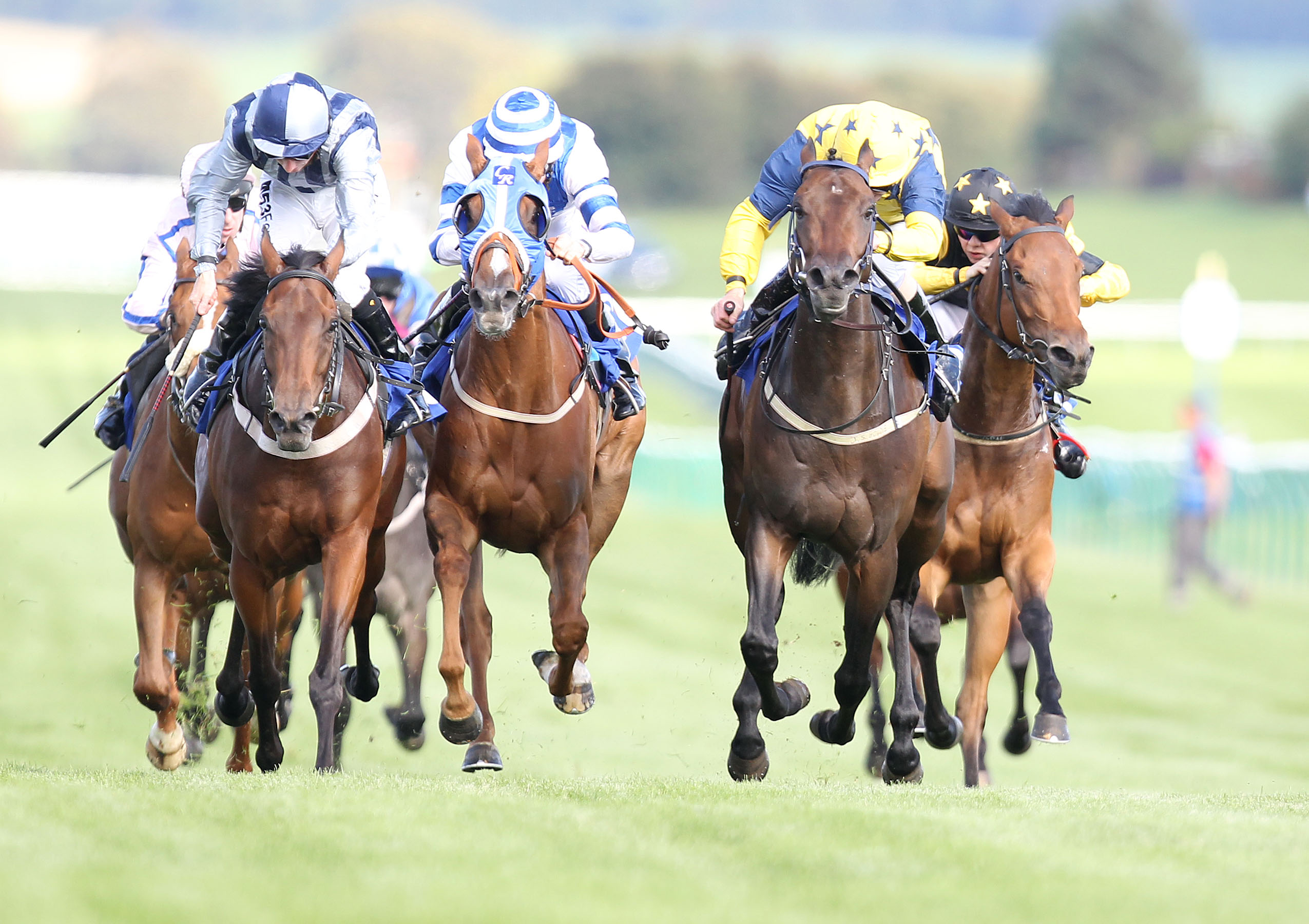 Enjoy an exhilarating day out at Ayr Racecourse